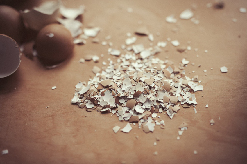 Crushed egg shells are displayed next to intact egg shells