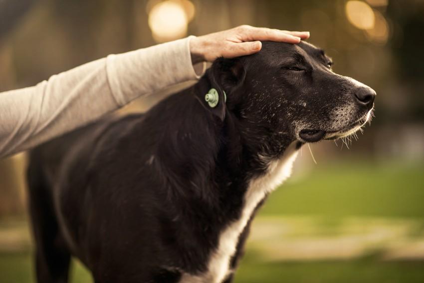 Naturopath Lisa Fitzgibbon feeling healthy patting a dog in a park in Turkey