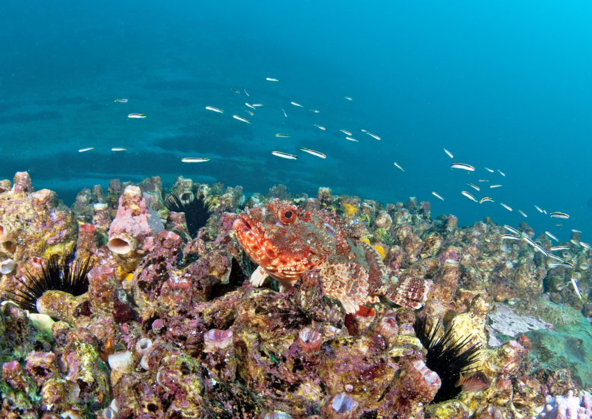 a healthy coral reef with many forms of sea-life