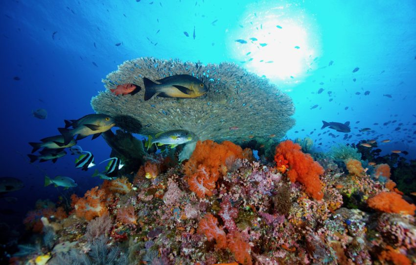 Healthy coral reef full of sea-life