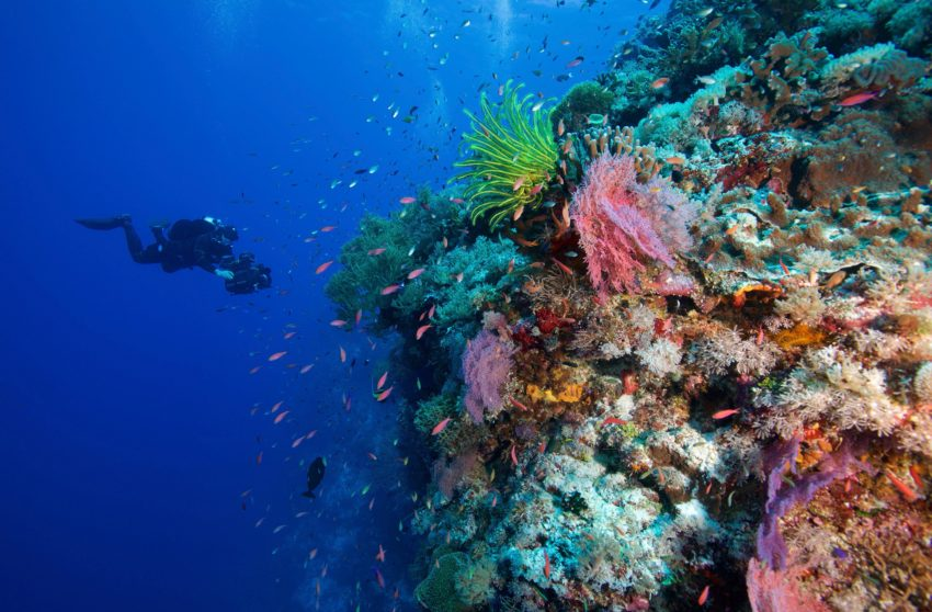Healthy coral reef with scuba diver exploring